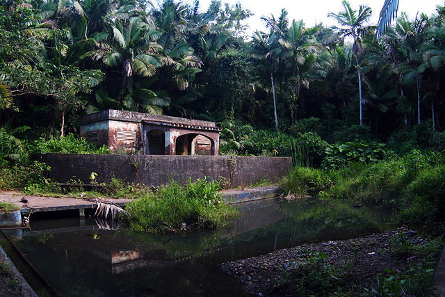 El Yunque - Tropical Forest