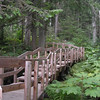 Walkway at Giant Cedars Trail