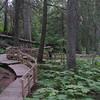 Hemlock Grove Trail - Glacier NP of Canada