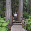 Hemlock Grove Trail - Glacier National Park