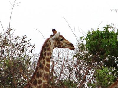 06 Africa Vol. 1 Chobe