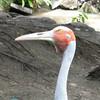Cairns Wildlife Park