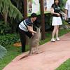 Kangaroo in the zoo
