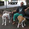 The dogs of Kuranda