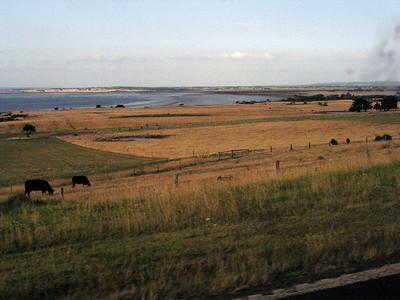 Pastoral scene enroute to Philip Island