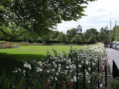 Rose garden hedge at Saint Patrick's Cathedral
