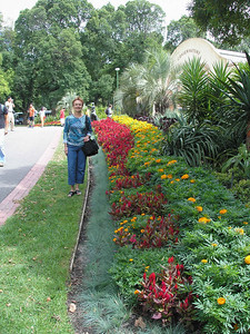 Flower hedge at Fitzroy gardens
