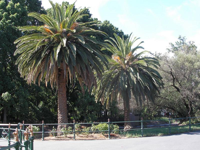 Trees by park in Bendigo