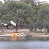 Lake at Kyneton Bushland Resort