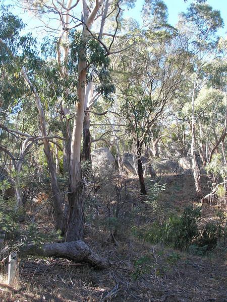 Black hill Reserve
