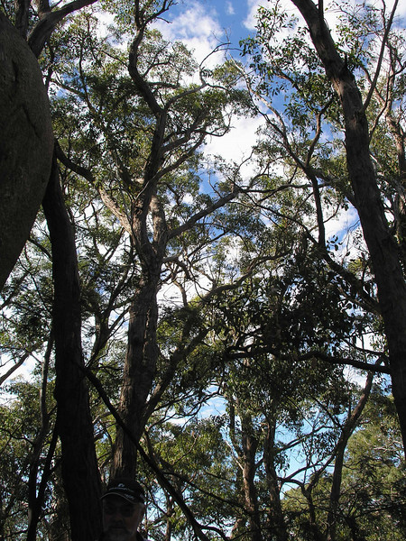 View from interior of Black Hill Reserve
