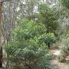 Path at Kyneton Bushland Resort