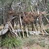 Bushland shelter
