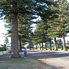 Trees outside the motel at Port Fairy - note the height