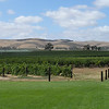 View over vineyards at Jacob's Creek