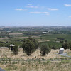 Barossa Valley vinyards