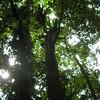 Trees at Natural Bridge