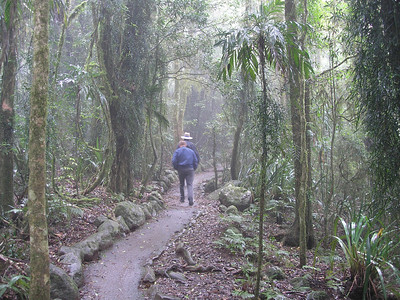 A stroll through the rain forest