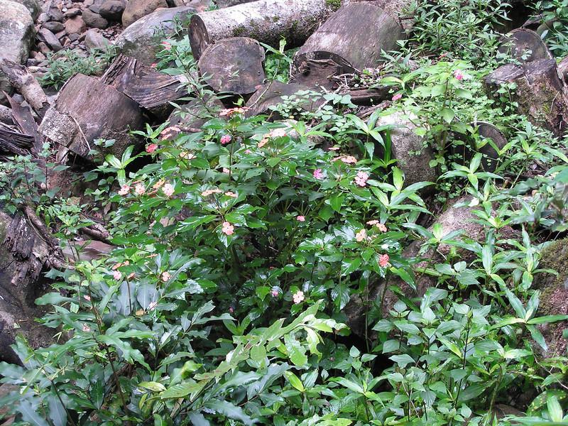 Flora at Natural Bridge