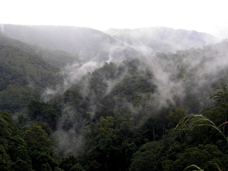 Valley in Rainforest