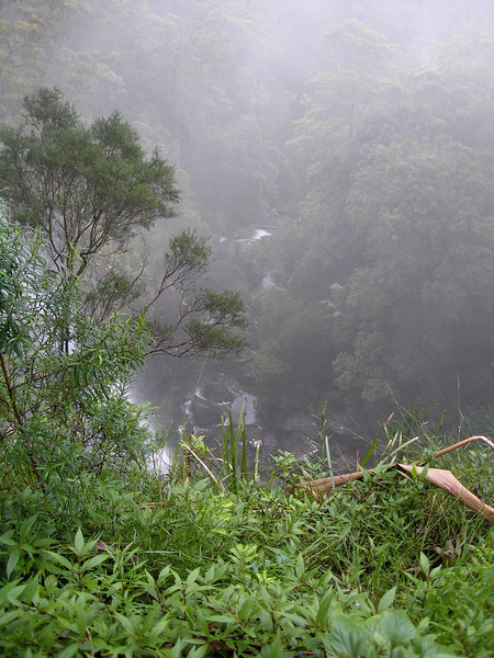 Goomoolahra Falls in rainforest