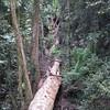 Natural Bridge trees