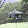 Birds at Hinze Dam Good Cafe