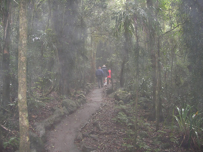 Stroll through the rain forest