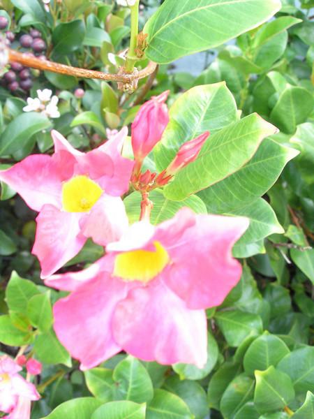 Flora at Emerald Sands