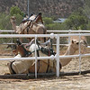 A double seater on one-hump camels