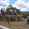 Two camels, four riders, one tender