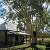 Eucalyptus tree at Alice Springs