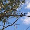 Birds at Alice Springs