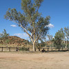 Grounds of original Alice Springs telegraph station