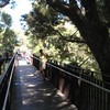 Start of tree-top bridge - Kings Park