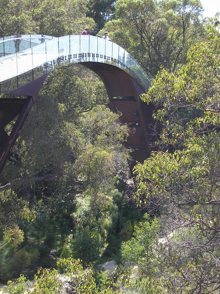 Tree Top Bridge in Kings Park