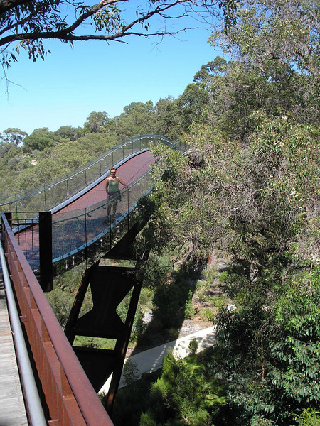 Tree top bridge - Kings Park
