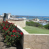 Roses and view of Geraldton - HMAS Sydney memorial
