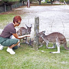Feeding the Roos at Alpaca Farm