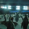 Penguins at Kelly Tarlton Antarctic Encounter