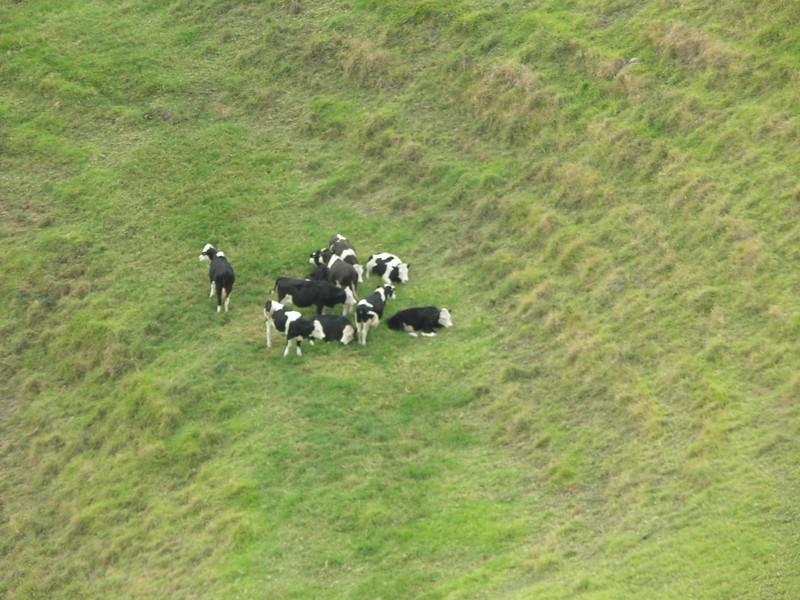 Lawn Mowers at Mt. Eden Crater