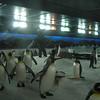 Making snow in Penguin enclosure