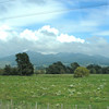 New Zealand landscape - from motor coach window