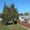 Arrowtown fruit tree