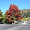 Autumn Color in Arrowtown