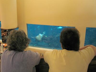 Sting Ray at the Oceanarium