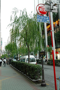 路旁可愛的行道樹(是柳樹嗎?我不知道,植物白痴)