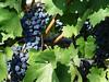 Silverado Winery