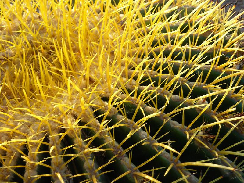 0070 Cactus