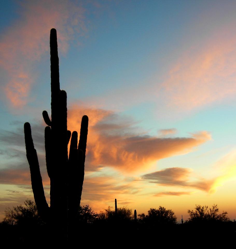 Saguaro cactus sunset in Arizona
